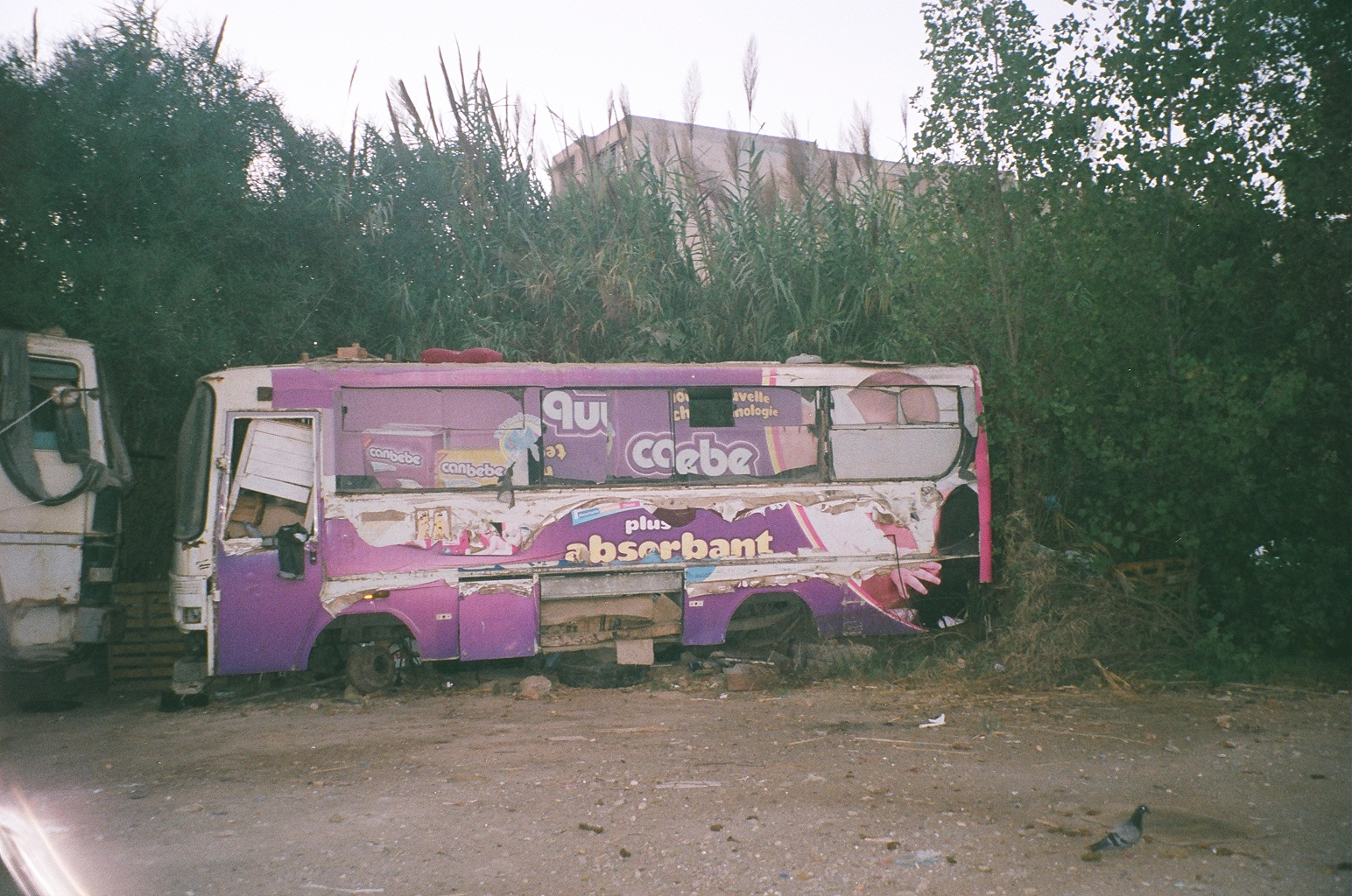 Autobusy_w_Algierii